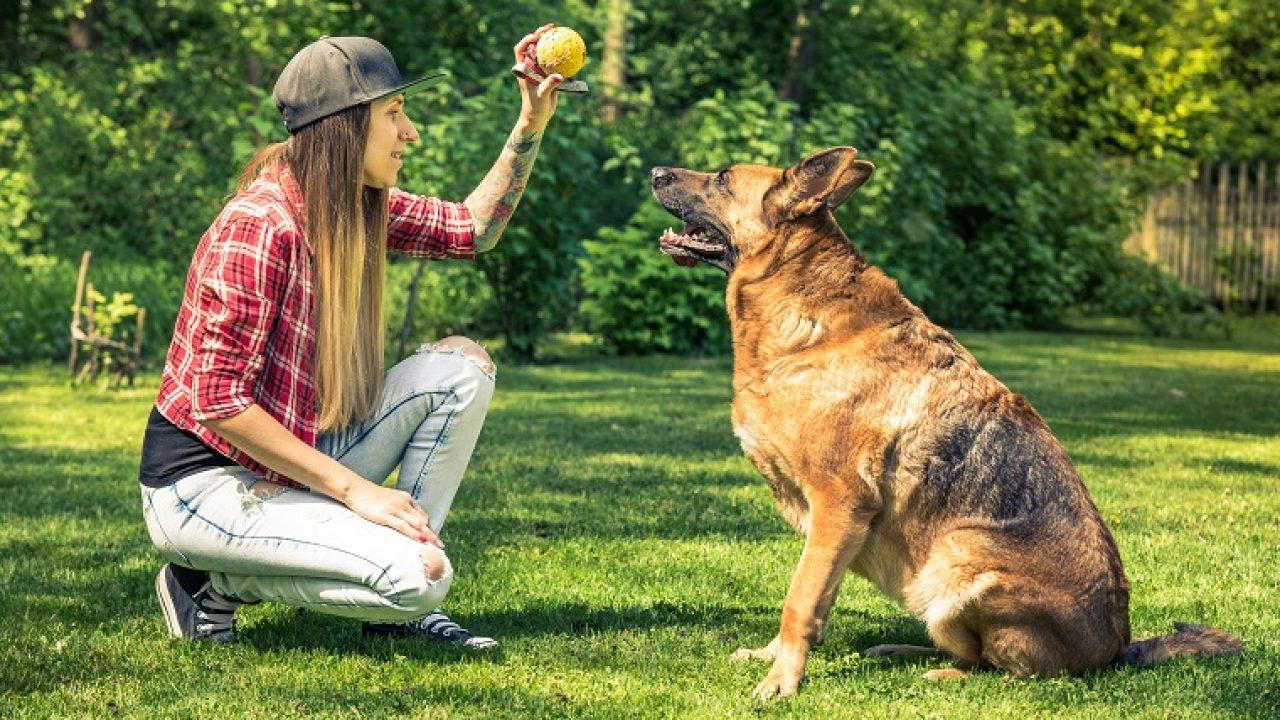 Hund online zu verkaufen